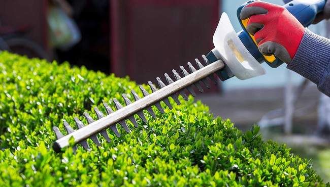 Hedging & Pruning services mackay