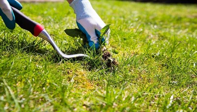 garden and lawn weeding services mackay