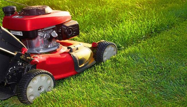 lawn mowing business services mackay