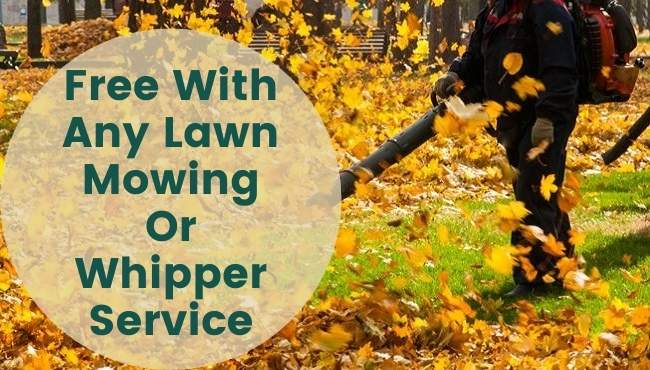 leaf blowing services mackay-3