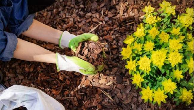 mulching services mackay